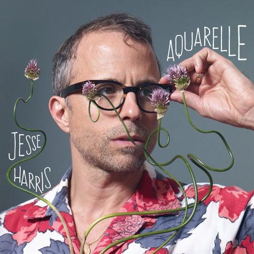 Aquarelle de Jesse Harris