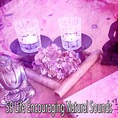 59 Life Encouraging Natural Sounds by Yoga Music
