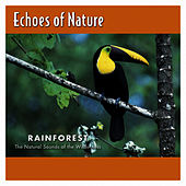 Rainforest by Echoes of Nature