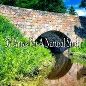 57 Auras For A Natural Study von Massage Therapy Music