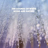 The Sounds of White Noise and Nature by Various Artists
