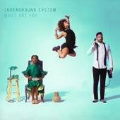 What Are You von Underground System