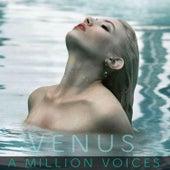 A Million Voices von Venus