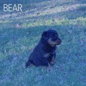 Long Nights by Bear