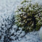 Snow by Sam Jones