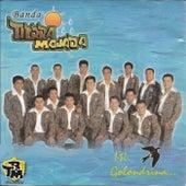 Mi Golondrina de Banda Tierra Mojada
