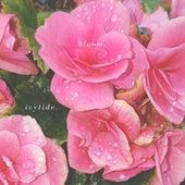 Bloom de Ivytide