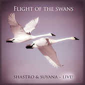 Flight of the Swans (Live) by Shastro