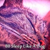 80 Sleep Like A Dog de Smart Baby Lullaby