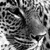 Jaguar by C-minus