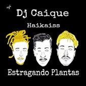 Estragando Plantas de DJ Caique