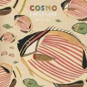 Hocking by Cosmo Sheldrake