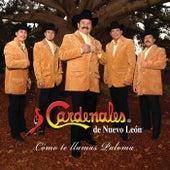 Cómo Te Llamas Paloma by Cardenales De Nuevo León
