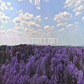 Lavender by Vibes