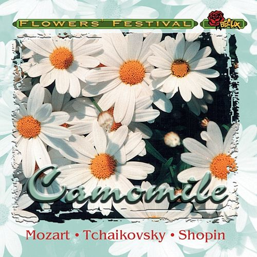 Camomile by Various Artists