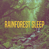 Rainforest Sleep by Various Artists