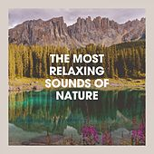 The Most Relaxing Sounds of Nature de Various Artists