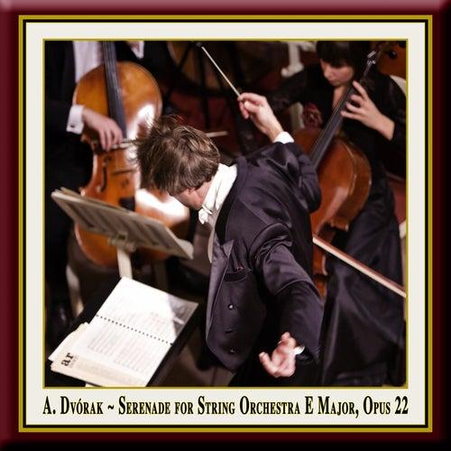Dvorak: Serenade for String Orchestra in E Major, Op. 22 by Pawel Przytocki