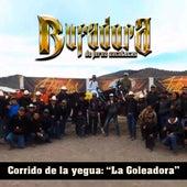 Corrido de la Yegua: La Goleadora de Banda La Bufadora De Jerez Zacatecas