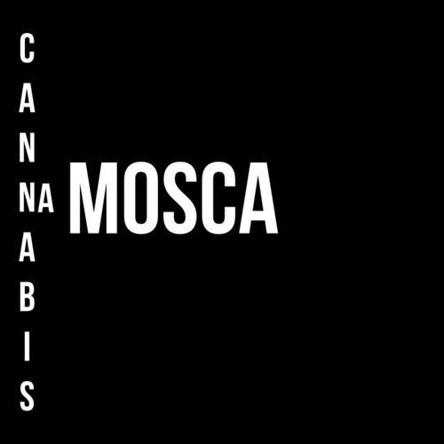 Cannabis na Mosca de Macaco Bong