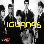 Iguanas von Iguanas