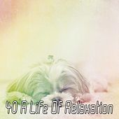 40 A Life Of Relaxation by Deep Sleep Music Academy