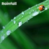 Rainfall de BodyHI