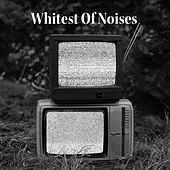 Whitest Of Noises de Various Artists