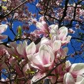 Magnolia de Uffe Ryder