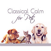 Classical Calm for Pets – Therapy Dogs with Classical Music, Relaxation for Your Animal Companion de Bielsko Baroque Chamber Academy
