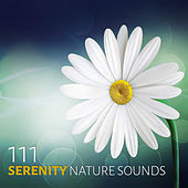 111 Serenity Nature Sounds: Asian Zen Spa Meditation Music and Relaxing Natural Ambiences for Yoga and Sleep by Various Artists