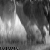 Black Buffalo by Stuperdoge