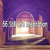 66 Still Life Meditation von Massage Therapy Music