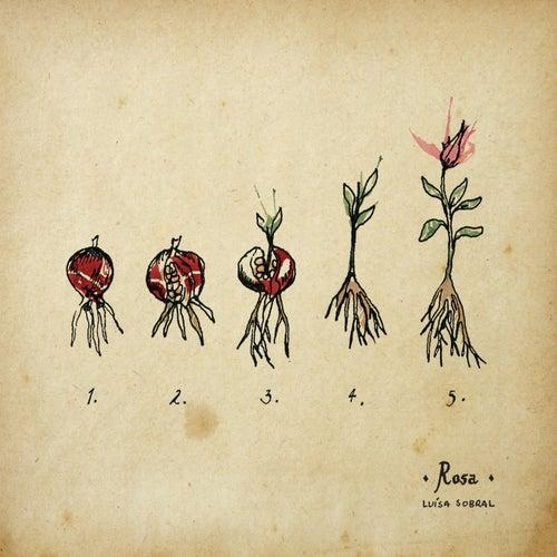 Rosa by Luisa Sobral