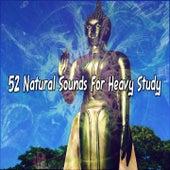 52 Natural Sounds For Heavy Study de Meditación Música Ambiente