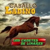 Caballo Ladino de Los Cadetes De Linares