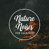 Nature Noises for Calm Sleep by Sleep Sound Library
