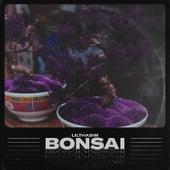 Bonsai de LilThaSim 価 ゲ