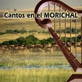 Cantos en el Morichal de Various Artists