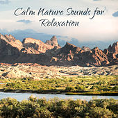Calm Nature Sounds for Relaxation de Nature Sound Collection