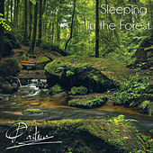 Sleeping in the Forest by Pontino