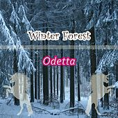 Winter Forest by Odetta