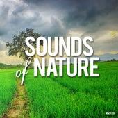 Sounds Of Nature - EP de Sounds Of Nature