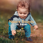 Nature Sounds for Babies by Nature Sounds (1)