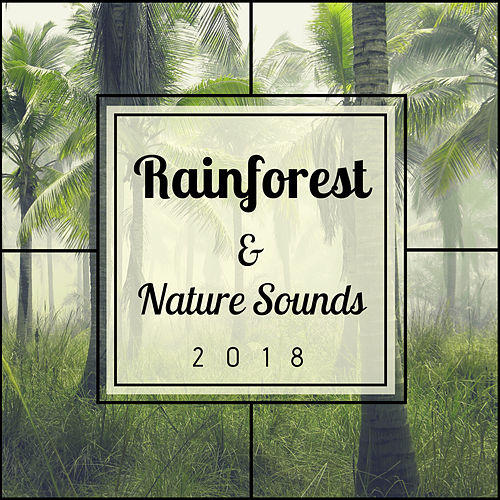 Rainforest & Nature Sounds 2018 - Relaxation with Rain Sounds and Relaxing Music by Baby Sleep Sleep