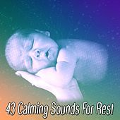 43 Calming Sounds For Rest by Deep Sleep Music Academy