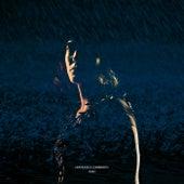 Rain de Francesca Lombardo