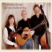 Catch Some Blackbird's Wing by Prairie Como