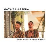 Gata Callejera de Josh Acosta