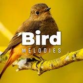 Bird Melodies by Bird Sounds